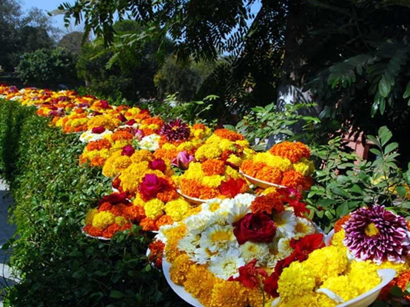 Flowers-image
